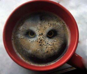 Búho de café